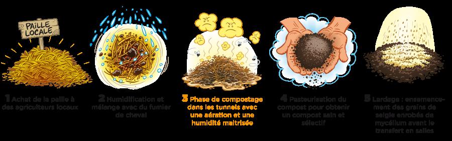 compost champignons